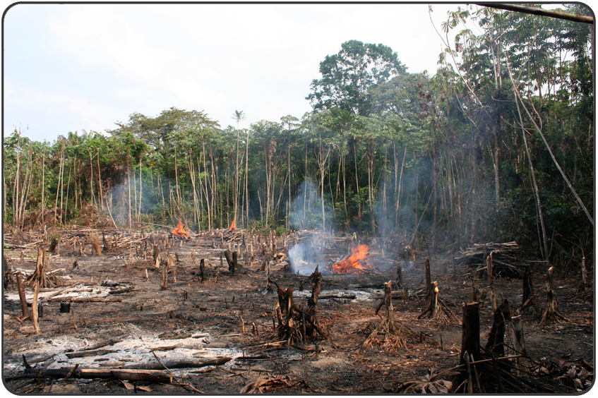 Deforestation - Brecknock Primary School